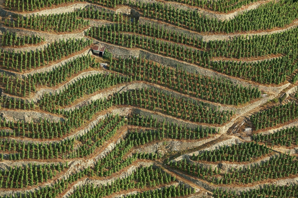 Vineyard on slopes - Cote-Rotie and Condrieu